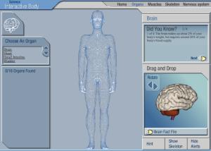Spiel auf bb.co.uk: Human Body Organs